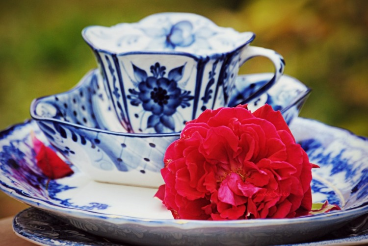 BLue plates and red rose