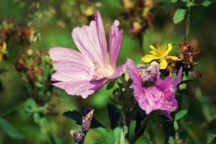 pink and yellowflowers