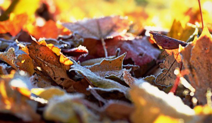 bright-fallen-leaves